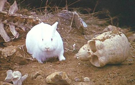 The rabbit of Caerbannog